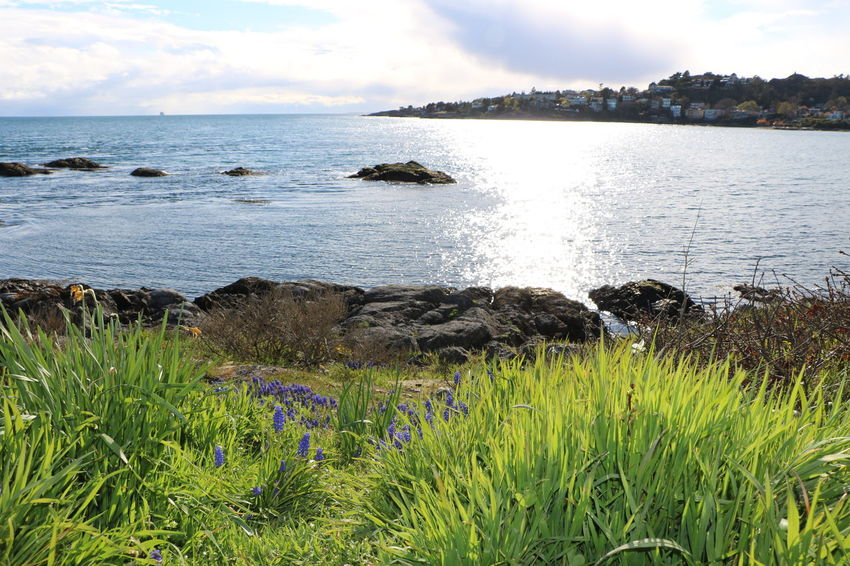 Purple Wildflower Purple Flower Beauty Landscape Beautiful Nature Wild Flowers Sea Relaxing Beauty In Nature Sky Day Victoria British Columbia Canada Landscape Photography Nature Blue Bench Sky And Clouds