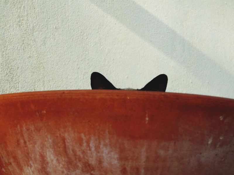 shadow no people day close-up outdoors cat 3 Colors  Architectural Detail Zen Cat Funny Cat Hear Cat Velvet Chair Shadow No People Day Close-up Outdoors Always Be Cozy Cat Lovers Cat Cats Cats Of EyeEm