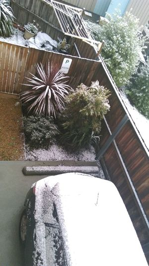Snowed in 😊 Check This Out Snow ❄ Stay Home My Tassie Cold Winter ❄⛄ No Work