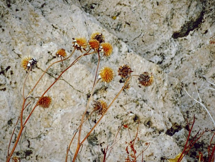 Nature No People Outdoors Close-up Rock Stone Geology Wyoming Worland WY Flowers Dead