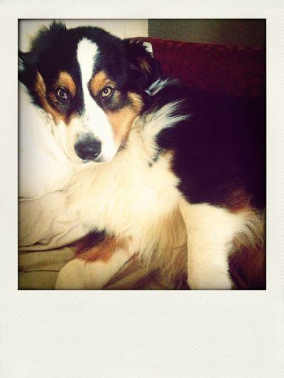 Ringo! Pets Puppy Chilling