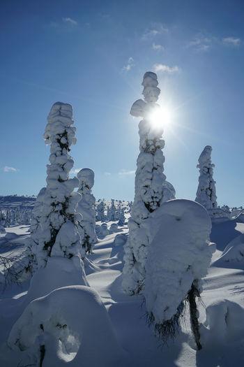 Snow covered rocks against sky