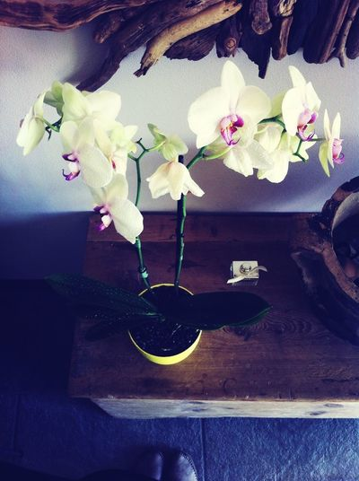 From Where I Stand Orchid Orchidee.
