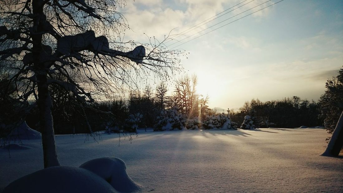 True winter is most beautiful. Forest And Sun Field Of Snow Cold Winter ❄⛄ Shadows And Backlighting Shadows & Lights
