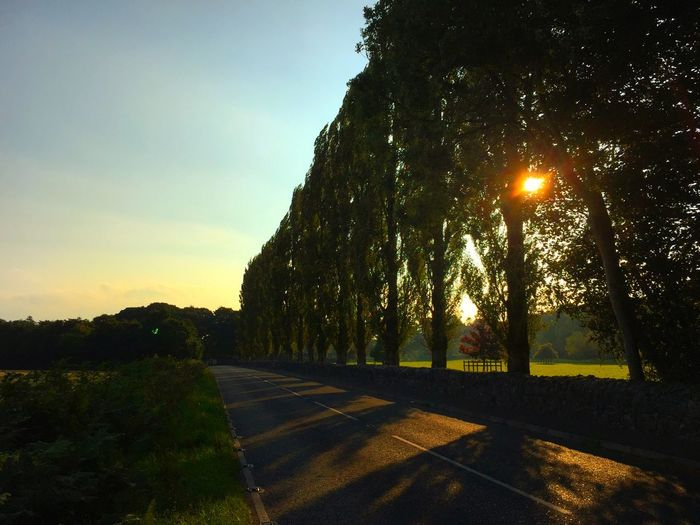 Poplars Tree_collection  Sunset_collection Green On The Road Home Glowing Outstanding Beauty EyeEm Best Shots Ireland IPS2015Light