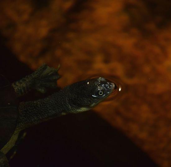 turtle Turtle TurtleLove Turtletime Turtleturtle Turtlesofinstagram Turtles Prilaga UnderSea Water Close-up Sea Life Underwater