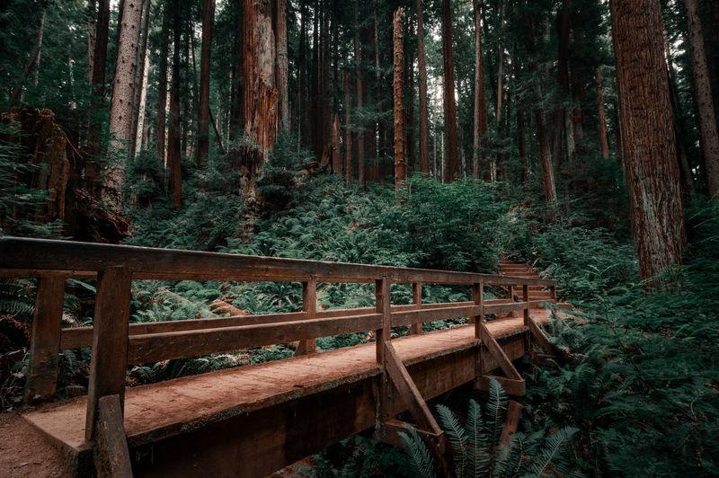 Footbridge against trees in forest