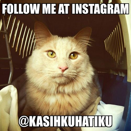 Follow them at instagram @KasihkuHatiku Cat Kitty Catlovers Mainecoon