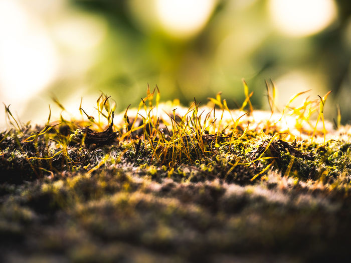 Selective Focus Grass Plant Nature Close-up No People Growth Day Green Color Land Sunlight Outdoors Field Beauty In Nature Moss Extreme Close-up Macro Animal Surface Level Animal Themes