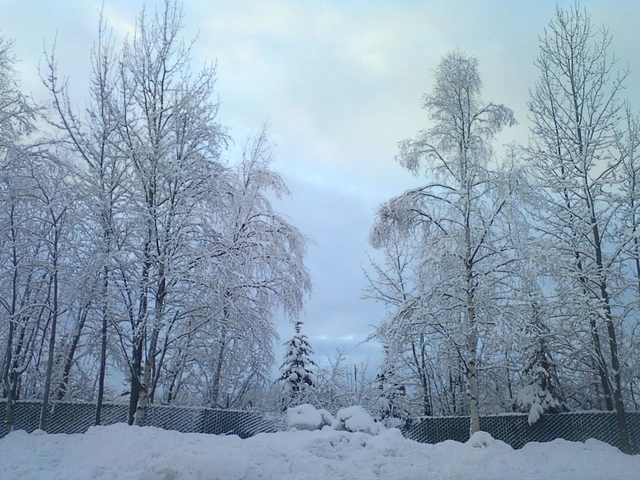 winter, snow, cold temperature, bare tree, weather, nature, beauty in nature, tree, tranquility, tranquil scene, outdoors, scenics, no people, frozen, day, landscape, branch, sky