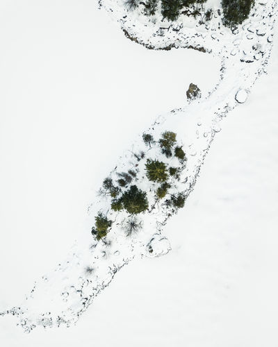 Beautiful Eibsee captured during in winter by drone. Winter Snow Cold Temperature Nature No People White Color Day Outdoors Beauty In Nature Tranquility High Angle View Covering Studio Shot Motion Close-up Land Frozen White Background Plant Purity Eibsee Bayern Tree Top Down View Drone  My Best Photo