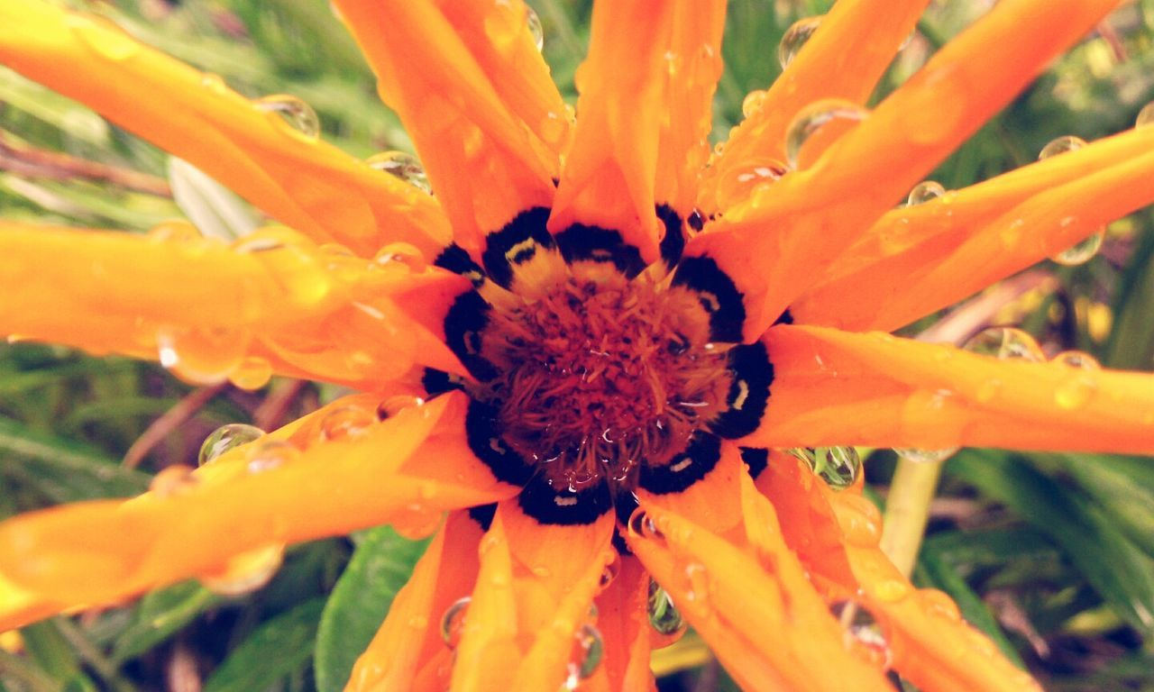 flower, growth, petal, beauty in nature, freshness, nature, fragility, orange color, flower head, plant, close-up, outdoors, day, pollen, blooming, no people
