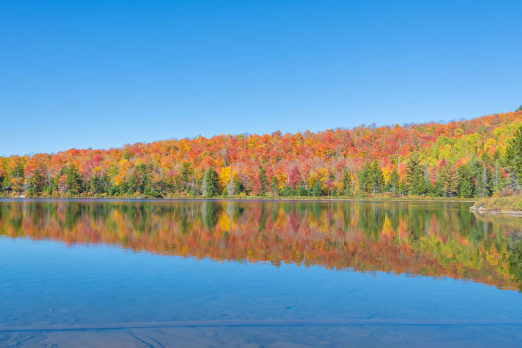 Scenic view of lake by autumn trees against clear blue sky