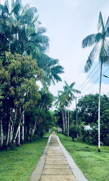 Peru South America Colombia Amazonas Travel Puerto Nariño Plant Tree Sky Growth Direction The Way Forward Green Color Nature No People Beauty In Nature Footpath Diminishing Perspective Tranquility Land Grass vanishing point Outdoors A New Beginning