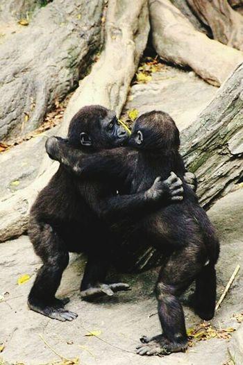 Animal Love ♥ Awsomenature Awesome_shots Amazing_captures Best View Beautiful Nature Monkey Love