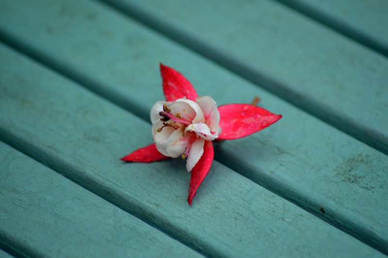 High Angle View Of Flower On Wood
