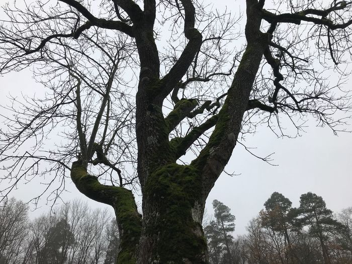 Bare Tree Beauty In Nature Branch Day Forest Growth Land Lifestyles Low Angle View Nature One Person Outdoors Plant Real People Sky Tranquility Tree Tree Trunk Trunk