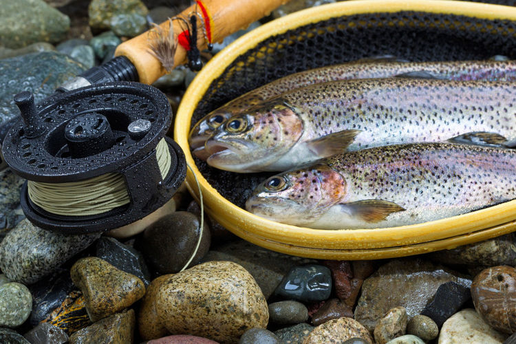 High angle view of trout with fishing rod on pebbles