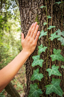 Connected With Nature Meditation Spirituality Yoga Body Part Care Day Finger Green Color Growth Hand Human Body Part Human Hand Human Limb Leaf Lifestyles Nature One Person Outdoors Plant Plant Part Real People Tree Tree Trunk Trunk