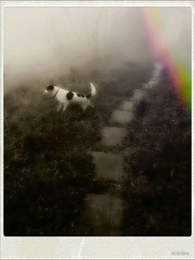 In Exploration. Dog Life Mybestfriend Enjoying Nature.