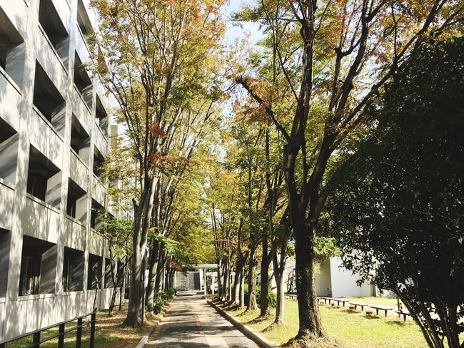 Sunlight In Autumn Sunlight Autumnbeauty Autumn Collection Autumn Leaves Autumn colors Japan Autumn Japan Tree Plant Architecture The Way Forward Built Structure Direction No People Nature Road Outdoors In A Row Day Footpath A New Beginning EyeEmNewHere