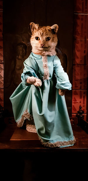 Dress Taxidermy Zetter Town House Creepy Domestic Cat Full Length Like A Child Standing