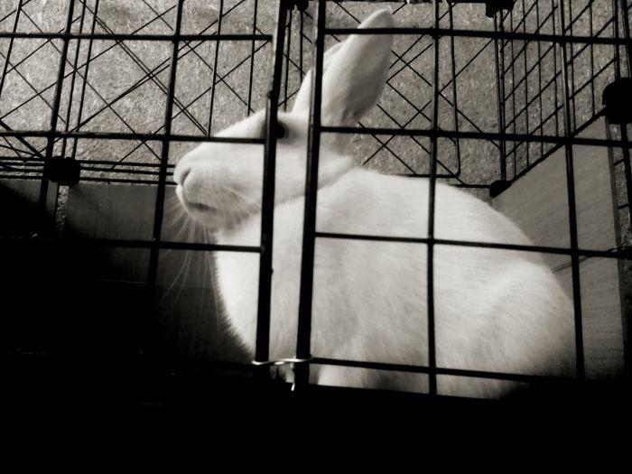 Black & White Blackandwhite Rabbits 🐇 Minimalism Animals Phtographer My Rabbit First Eyeem Photo Sound Of Life Showcase: November