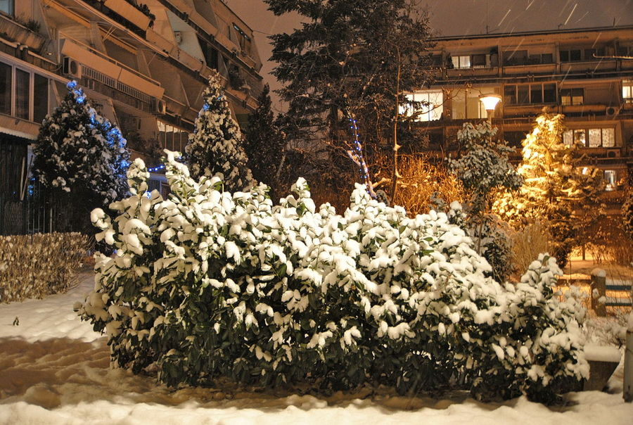 Architecture Beauty In Nature Building Exterior Built Structure Christmas Christmas Decoration Christmas Tree City Cold Temperature Day Flower Freshness Illuminated Nature No People Outdoors Snow Suburbia Suburbia Nightscape Tree Winter
