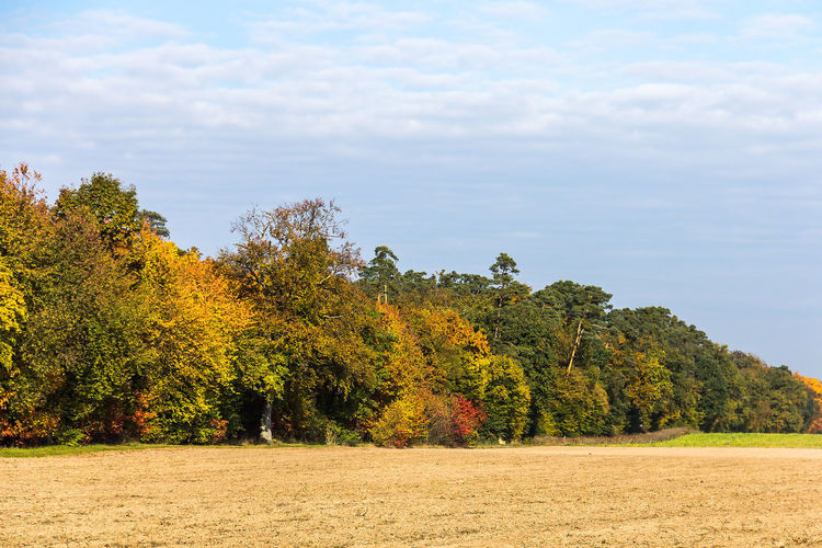 Autumn Beauty In Nature Change Cloud - Sky Day Edge Of A Forest Field Growth Landscape Nature No People Outdoors Scenics Sky Tranquil Scene Tranquility Tree
