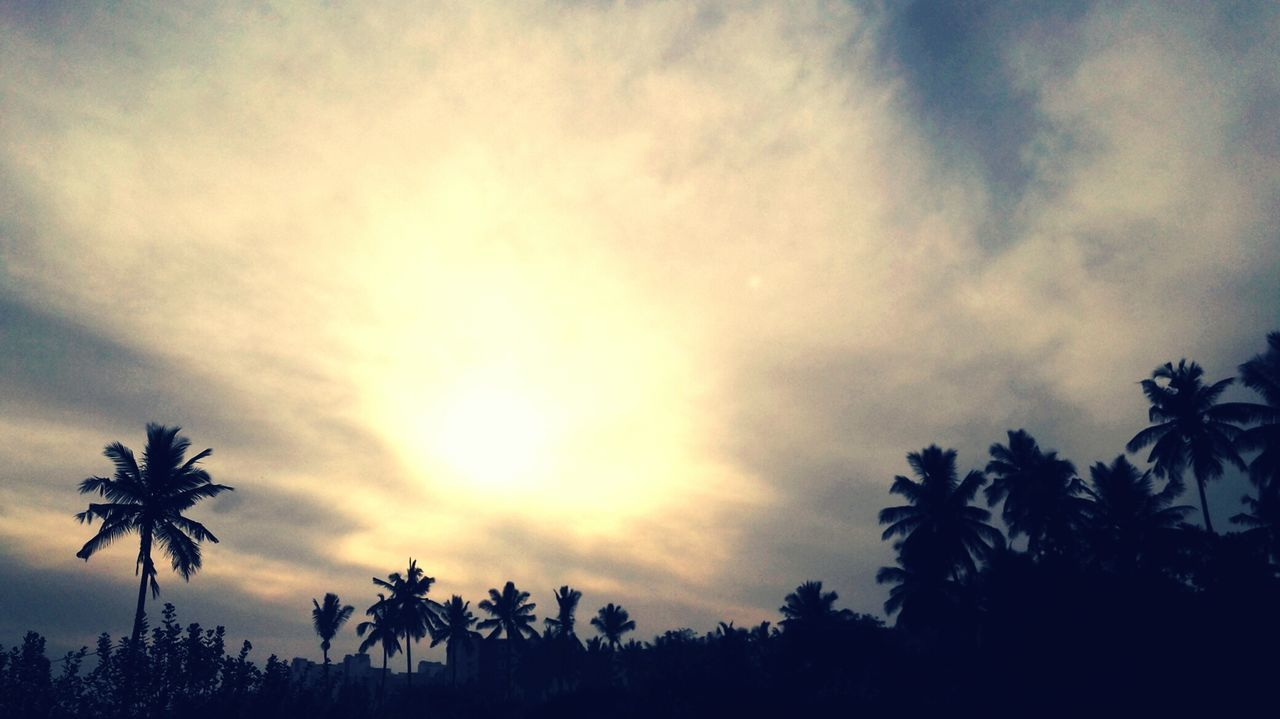 palm tree, tree, silhouette, sky, beauty in nature, nature, sunset, no people, growth, low angle view, scenics, tranquility, outdoors, day