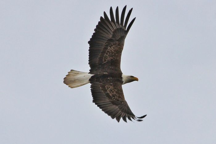 they have made me more Photography Eagle Wildlife Nature Wild Raptor