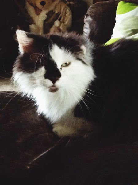 Brownie ?❤️? Love My Cat Furbaby Cute Cats Cute Pets Cat Cat Lovers Playing With The Animals Loving Taking Photos