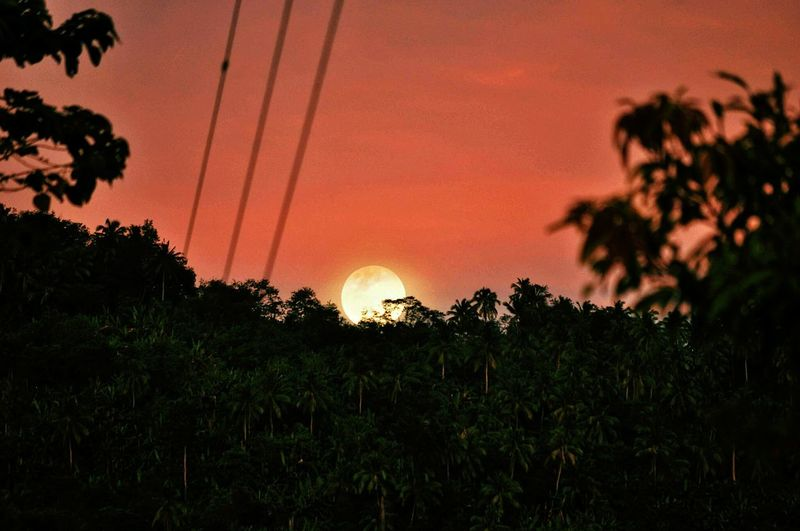 Nature Beauty In Nature Nature_collection Nature Photography Big Bright Moon Moon Twilight Eyeem Philippines Nikon Collection Nikond90 Nikonphotography Outdoors Outdoor Photography Sunset Orange Color Tree Beauty In Nature Nature Silhouette No People