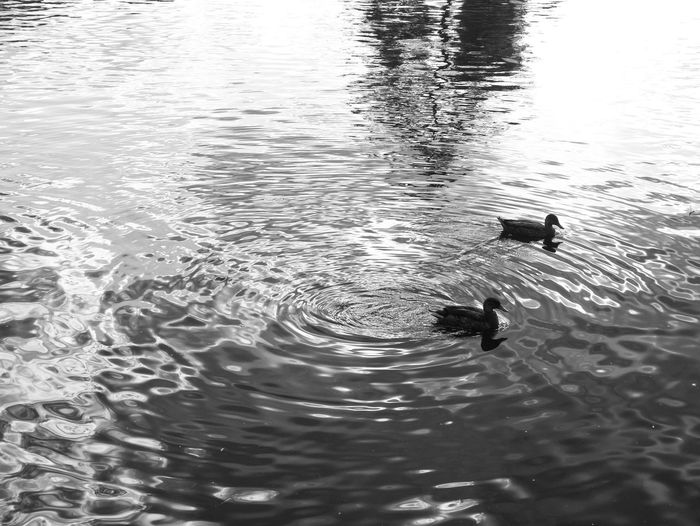 Lake Side Water