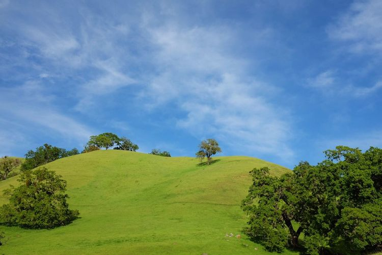 View Trees On Rolling Green Hill Against Blue Sky