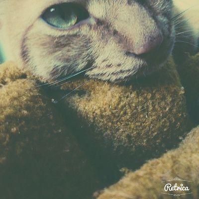 Mi Bebe ❤