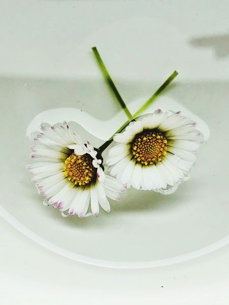 Flowers floating in water. Flower Freshness Flowering Plant Beauty In Nature Flower Head Close-up Plant Petal