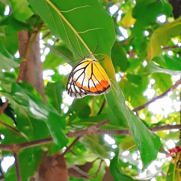 Insect Animals In The Wild Animal Wildlife Leaf Animal Themes No People