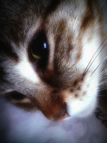 Sweet Nina Catlife Cat Lovers Catoftheday Cat♡ Catworld