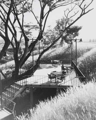 🌾🍃Once upon a time 🌲 Check This Out Relaxing Enjoying Life Travelphotography Taking Photos Capturing Freedom Hello World Feeling Good GoodTimes IPhone Photography WeLoveNature  Taking Photos Chill Memories First Eyeem Photo Paradise Blackandwhite Photography Black Background Toscana Valley Khaoyai