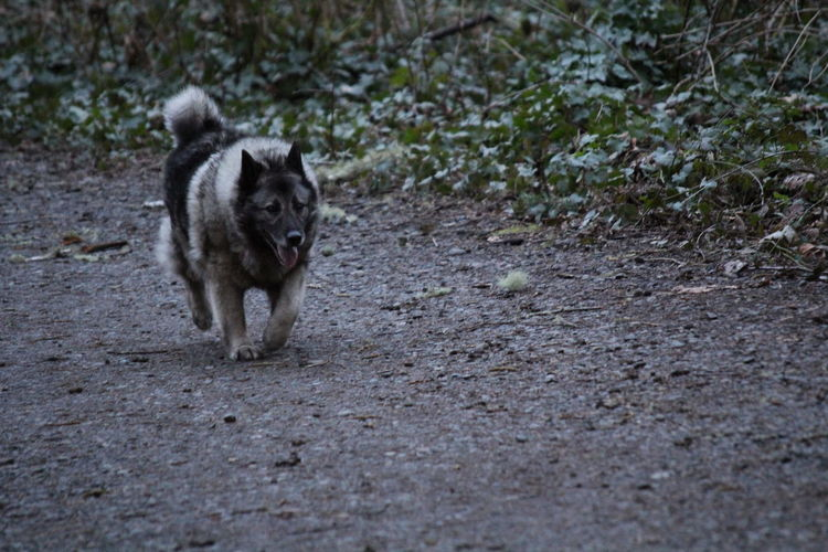 Dogs Of EyeEm Animal Themes Day Dog Dog Love Domestic Animals Mammal Nature No People One Animal Outdoors