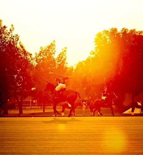 Polo in the golden hour! Sport Equestrian Polo Mammal Domestic Animals Animal Themes Tree Animal Wildlife Animal Livestock Sky Nature Riding Sunset Sunlight