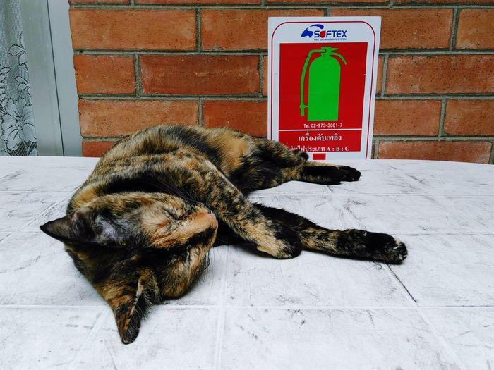 Cat Animal Pets Sleep