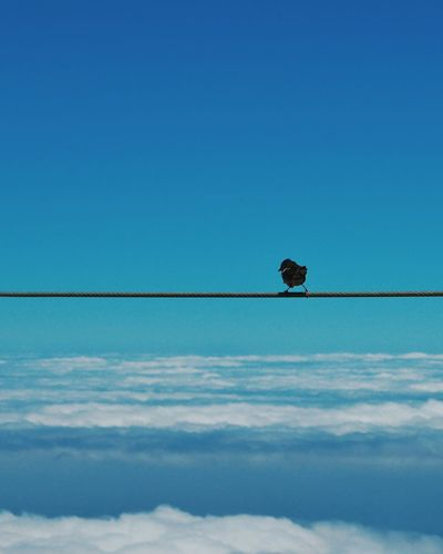 Bird perching on rope against clear blue sky