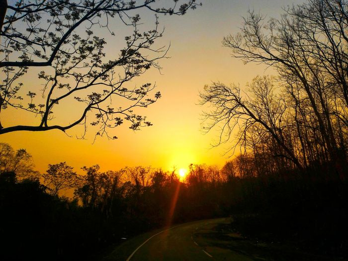 Sunset on the highway in Assam. Assam Forest IndiaTrail Naturephotography Northeastindia India Jungle Trees On The Road Trees Tree Sunset Assam Highway Asian  Sunset_collection Sunsets a:235454] Feel The Journey