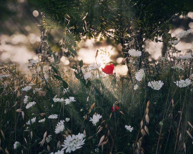 Somewhere Flower Tree Red Close-up Sky Grass Wildflower Rose Hip Plant Life