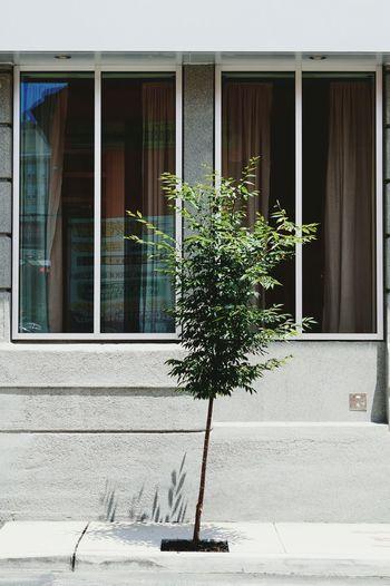 Singular. VSCO Vscocam Vscogrid Solotree Treescollection EyeEm Nature Lover EyeEm EyeEm Best Edits EyeEm Gallery EyeEm Best Shots