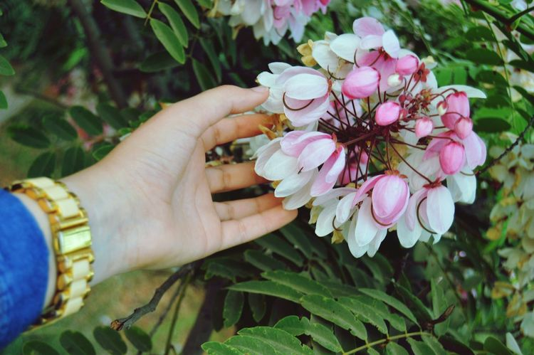 Flowers Natural Beauty Me Photo Of The Day Photograph