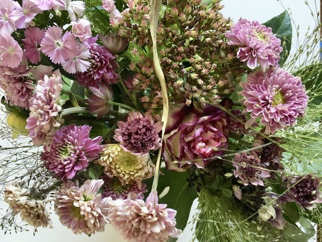Beauty In Nature Bouquet Close-up Day Flower Flower Arrangement Flower Head Flowering Plant Fragility Freshness Growth High Angle View Inflorescence Leaf Nature No People Outdoors Petal Pink Color Plant Plant Part Purple Vulnerability