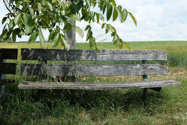 Bench on field by tree against sky